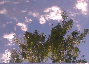 Foto de árbolo sobre cielo azul.