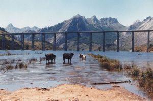 Primeras aguas. Foto de Luis Prado Allende