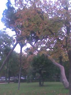 El beso de los árboles, en el parque del Retiro.