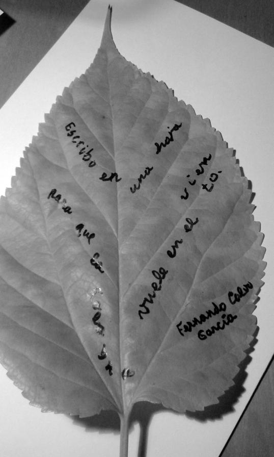 Poema visual Fernando Calvo